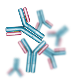 Antibody by Gentaur (Gentaur) [Public domain], via Wikimedia Commons