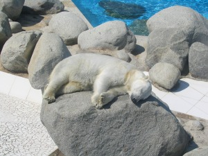 polar-bear-614721_1280