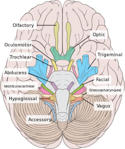 vagus nerve stimulation from neurology and beyond the neurology
