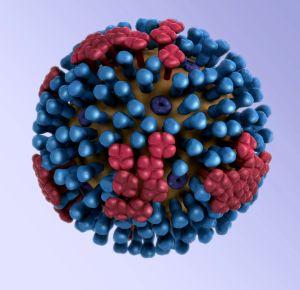 3D model of influenza virus