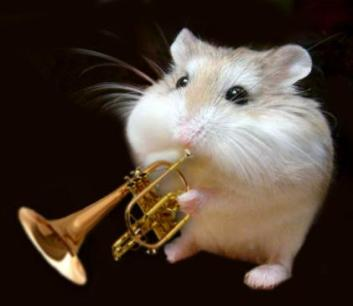 Jazz Mouse. Richard Scott on Flikr. https://www.flickr.com/photos/richardmscott/2091183925