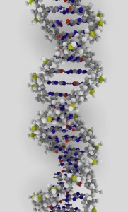 DNA rendering. ynse on Flikr. https://www.flickr.com/photos/ynse/542370154