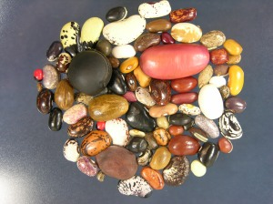 Legume diversity. Global Crop Diversity Trust on Flikr. https://www.flickr.com/photos/croptrust/3594324633