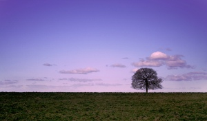 Solitary tree at Sunset. epcp on Flikr. https://www.flickr.com/photos/epcprince/3418260382